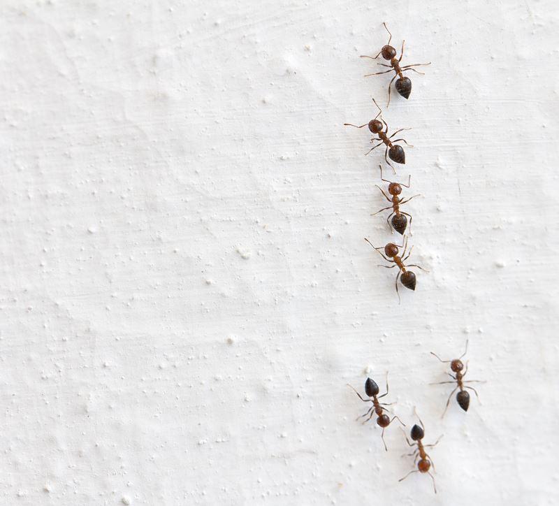 Domowej roboty pułapka na mrówki – jak ją zrobić samodzielnie krok po kroku 2