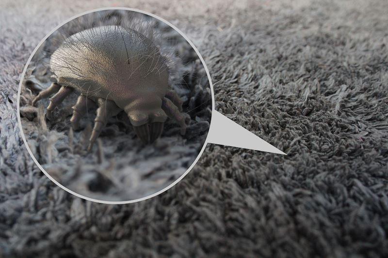 Alergia na roztocza kurzu domowego a sprzątanie w domu - na co zwrócić uwagę 2