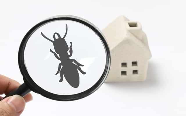 Co odstrasza mrówki? Profesjonalne i domowe sposoby na pozbycie się mrówek