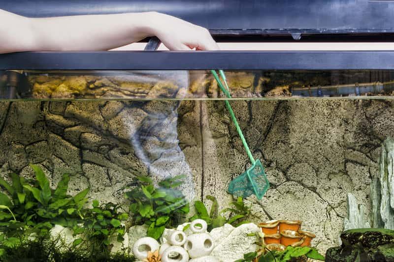 Podbieranie rybek z akwarium