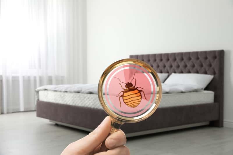 Najpopularniejsze insekty domowe w Polsce – zobacz jak z nimi walczyć