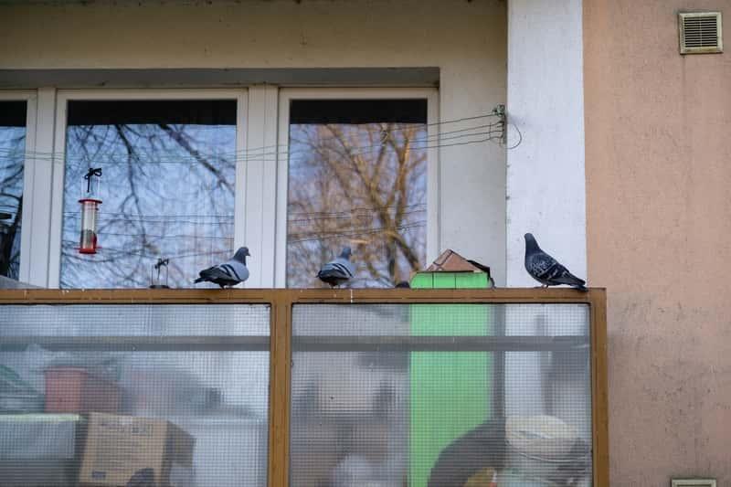 Jak odstraszyć gołębie? Wybieramy najskuteczniejszy odstraszacz gołębi