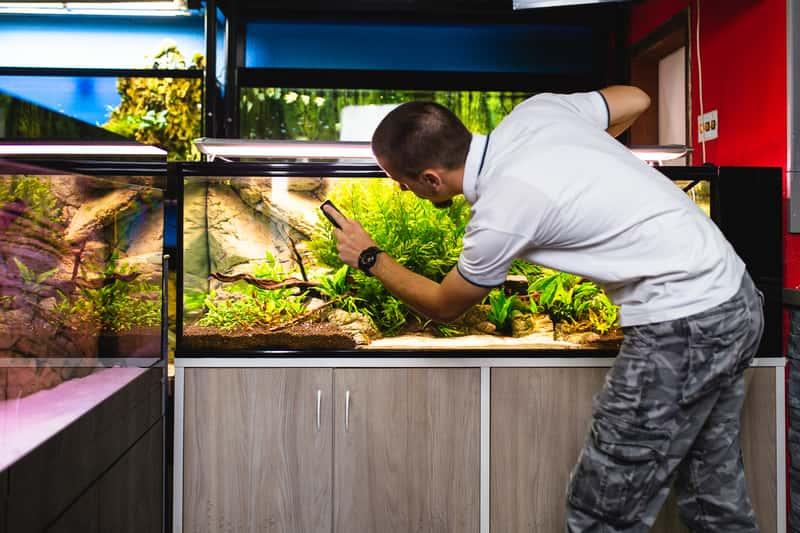Mężczyzna podczas czyszczenia akwarium