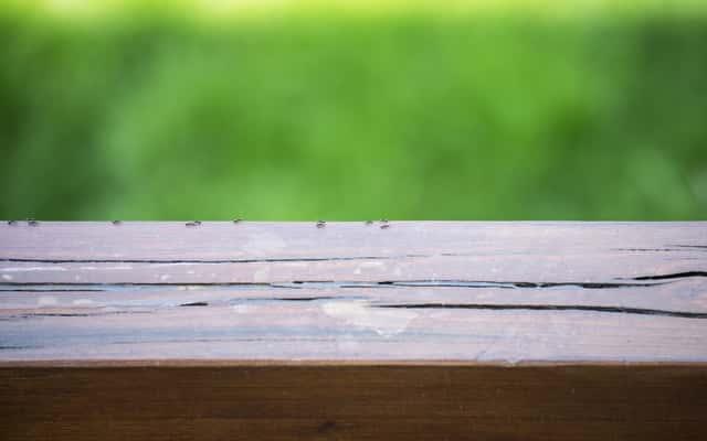Jak wytępić mrówki w domu? Domowe sposoby na to, jak się pozbyć mrówek