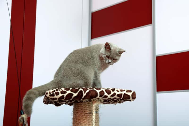 Jak zrobić drapak dla kota? Poradnik krok po kroku
