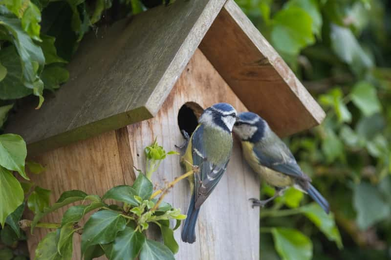 Jak zrobić karmnik dla ptaków krok po kroku? Praktyczny poradnik