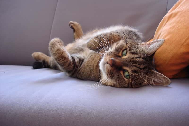 Kot leżący na kanapie