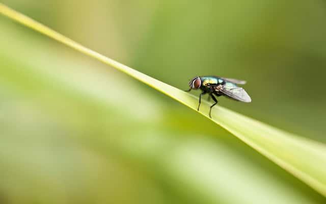 Co odstrasza muchy? Oto zapachy, rośliny i inne skuteczne preparaty