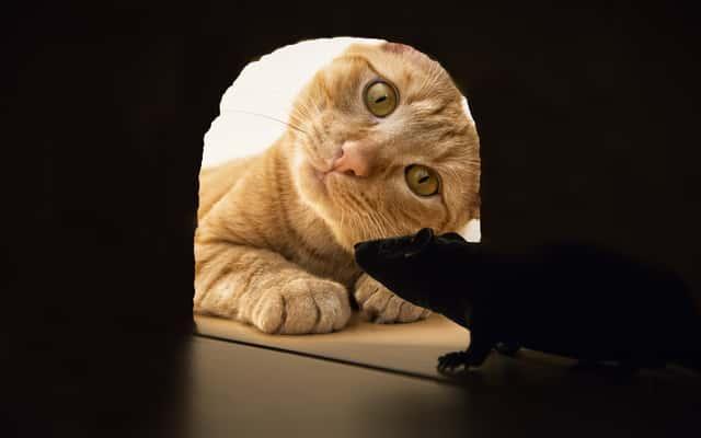 Jak pozbyć się myszy polnych z domu, piwnicy czy strychu