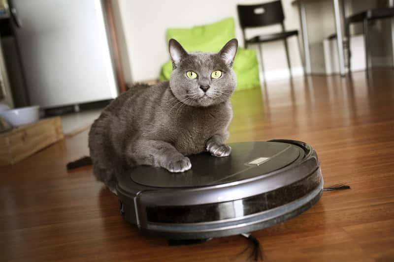 Kot na odkurzaczu automatycznym