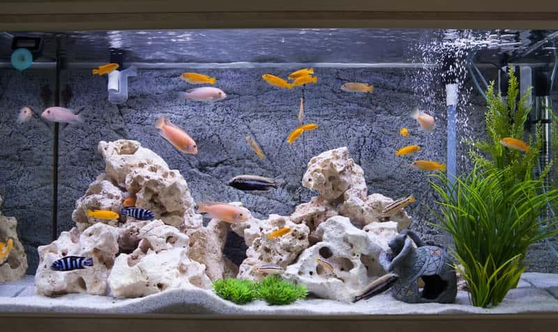 Czyste akwarium z rybkami