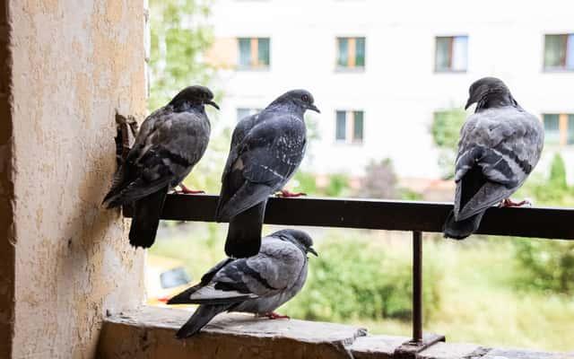 Jaki odstraszacz ptaków wybrać? Rodzaje, ceny, porady przy wyborze