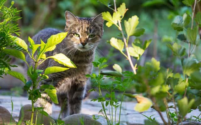 Czym i jak odstraszyć koty? Oto 5 najlepszych sposobów