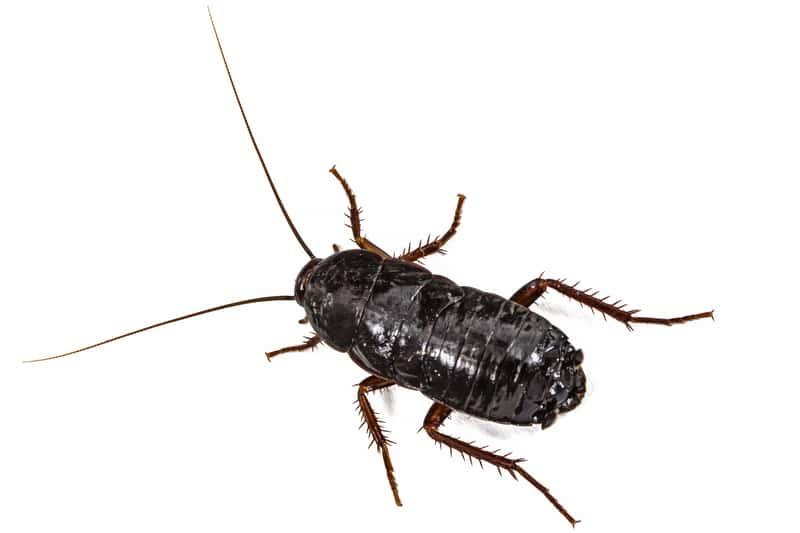 10 najbardziej uciążliwych owadów domowych i sposoby na ich zwalczanie