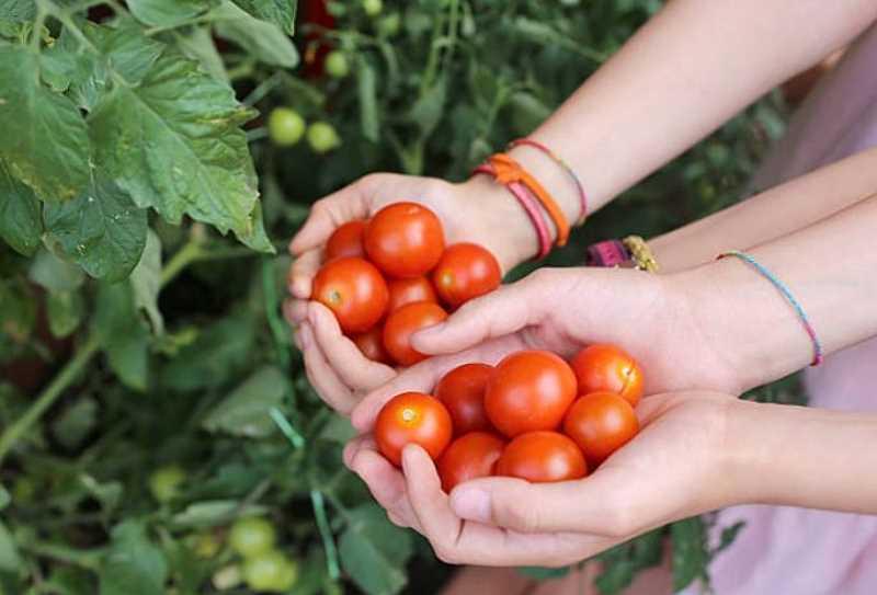 Owoce i warzywa balkonowe