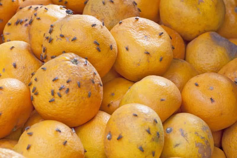 Domowe sposoby na zwalczanie muszek owocówek krok po kroku – sprawdź je!