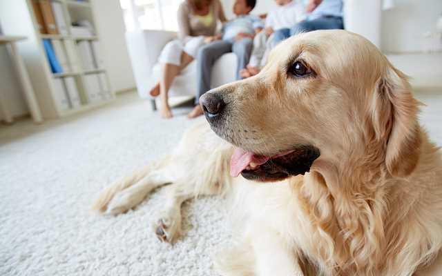 Jak zachować czystość w domu z psem? Praktycznie porady