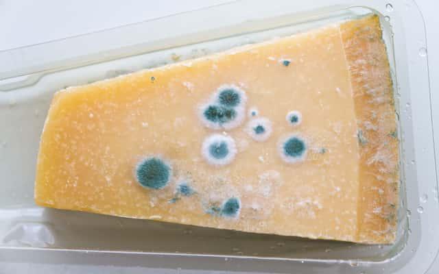 Pleśń w lodówce - przyczyny i sposoby, jak usunąć pleśń z lodówki