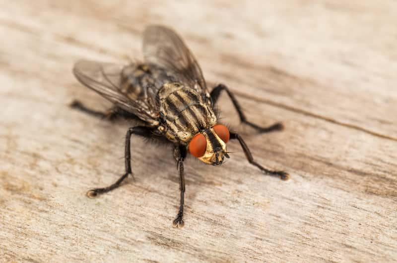 Jaki preparat na muchy jest najskuteczniejszy? Sprawdzamy!