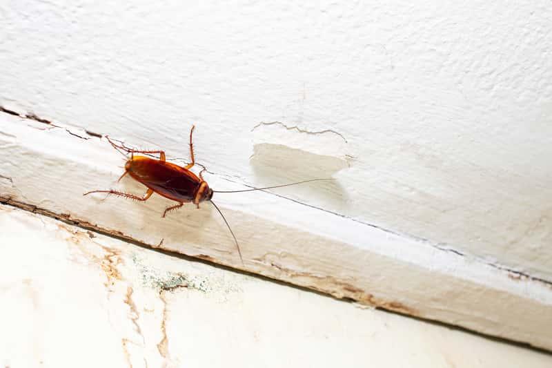 Najbardziej uciążliwe robaki domowe w Polsce – jak z nimi walczyć?
