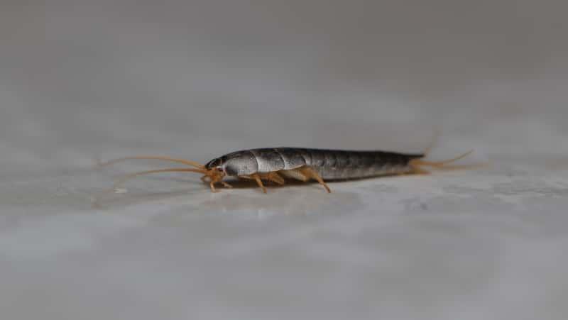 Najczęściej spotykane robaki w łazienkach i sposoby na walkę z nimi