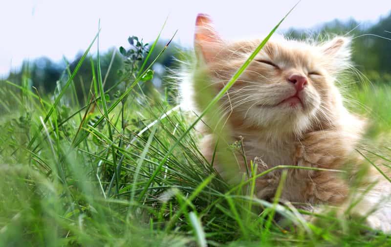 Sennik kot – jakie jest znaczenie snu o kotach? Wyjaśniamy!