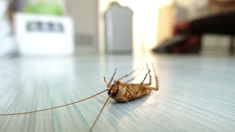 5 najlepszych sposobów na karaluchy w domu – zobacz, jak się ich pozbyć