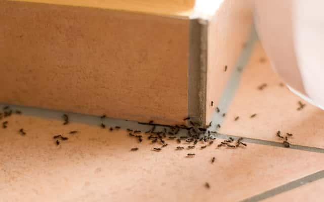 Domowe sposoby na mrówki - zobacz, co je odstrasza i jak się ich pozbyć