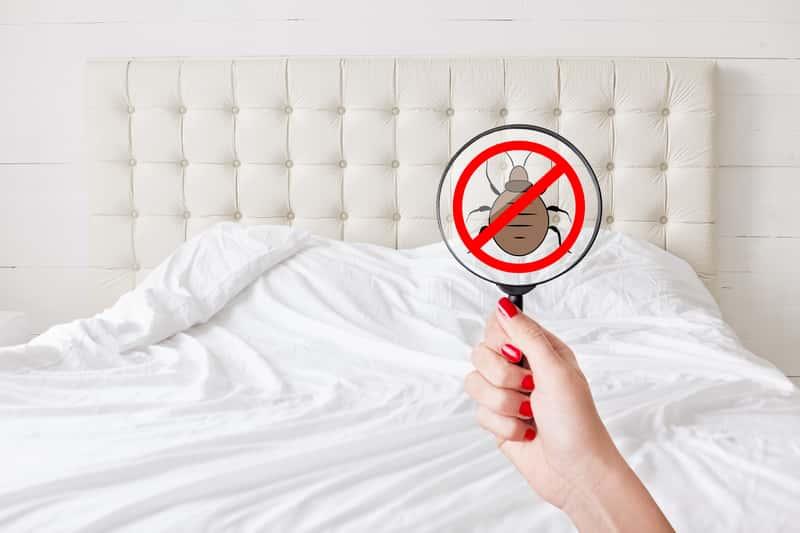 Domowe sposoby na pluskwy - jak zwalczyć pluskwy domowe w mieszkaniu?