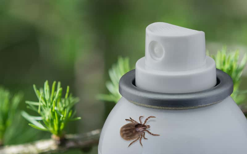 Najlepszy preparat i spray na kleszcze - 6 najlepszych specyfików