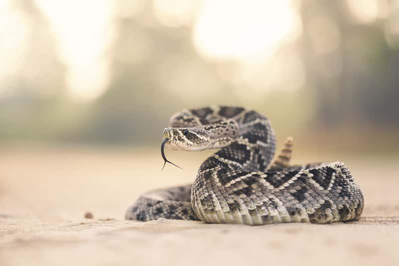 Sennik wąż – co oznacza sen o wężu? Wyjaśniamy znaczenie snu