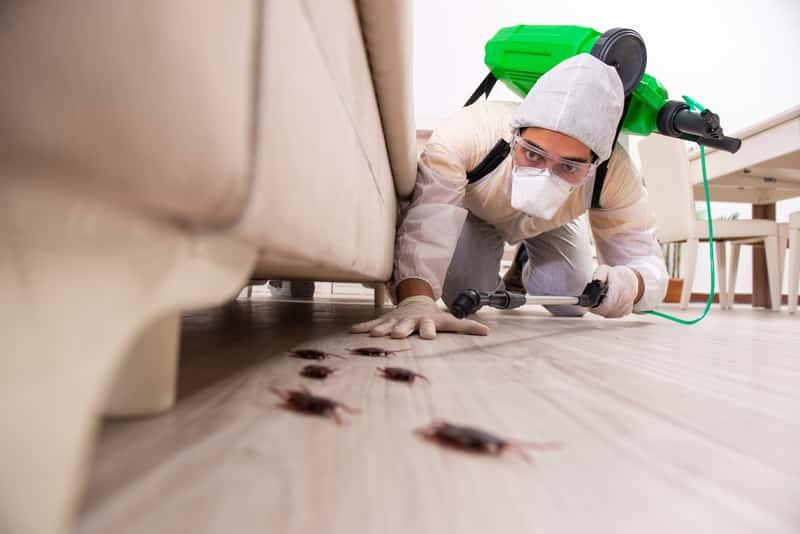Zwalczanie karaluchów krok po kroku – jak się ich trwale pozbyć z domu?