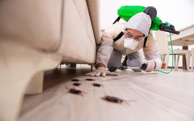 Jak pozbyć się karaluchów z domu? Oto najlepsze metody