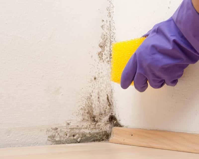 Grzyb na ścianie to poważny problem. Usuwanie pleśni ze ścian wymaga zastosowanie środków odgrzybiających i wysuszenia ściany.