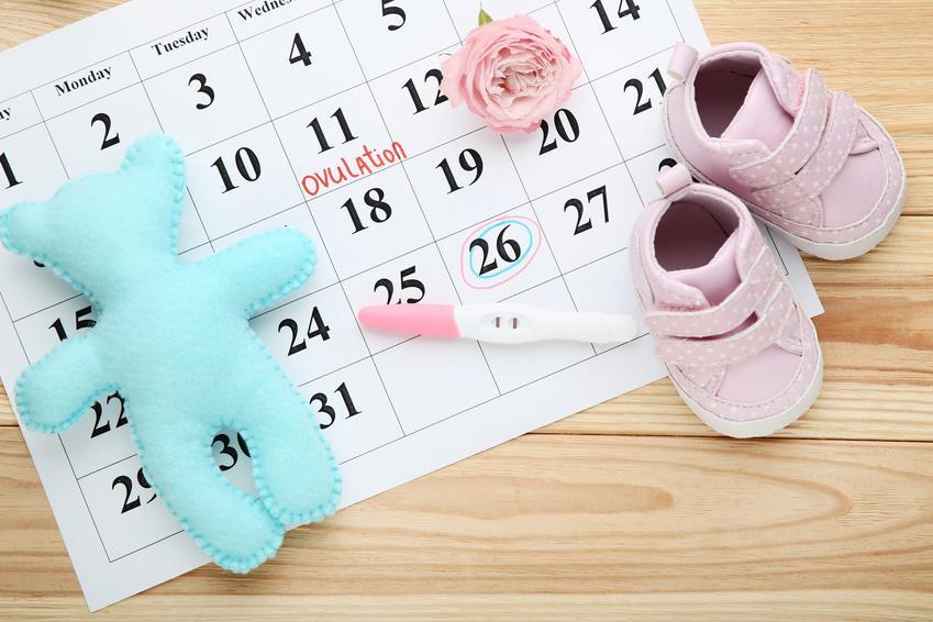 Kalendarz i akcesoria dziecięce, a także porady, jak obliczyć dni płodne