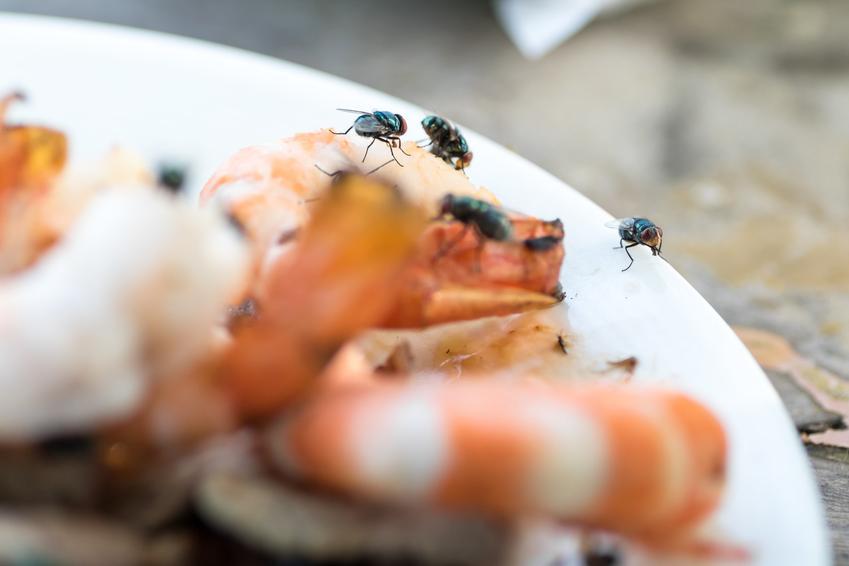 Muchy siedzące na jedzeniu, a także porady, jak zrobić pułapkę na muchy