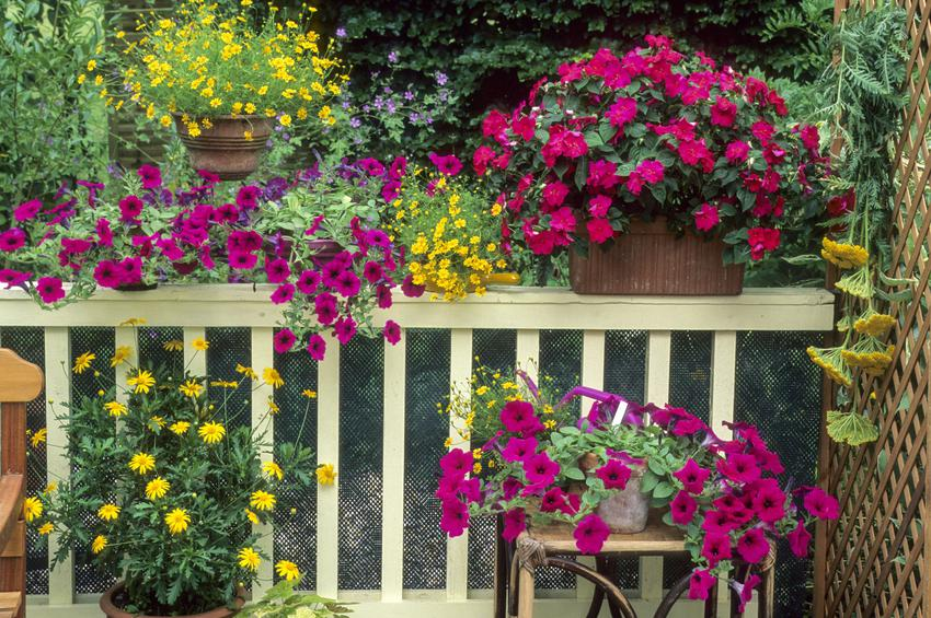Jakie Kwiaty Na Balkon Wybrac Praktyczny Poradnik Dla Kazdego