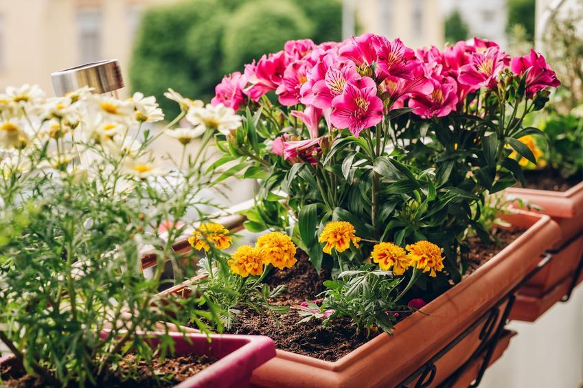 Skrzynki z kwitnącymi kwiatami na balkonie, a także jakie kwiaty na balkon wybrać w zależności od ekspozycji