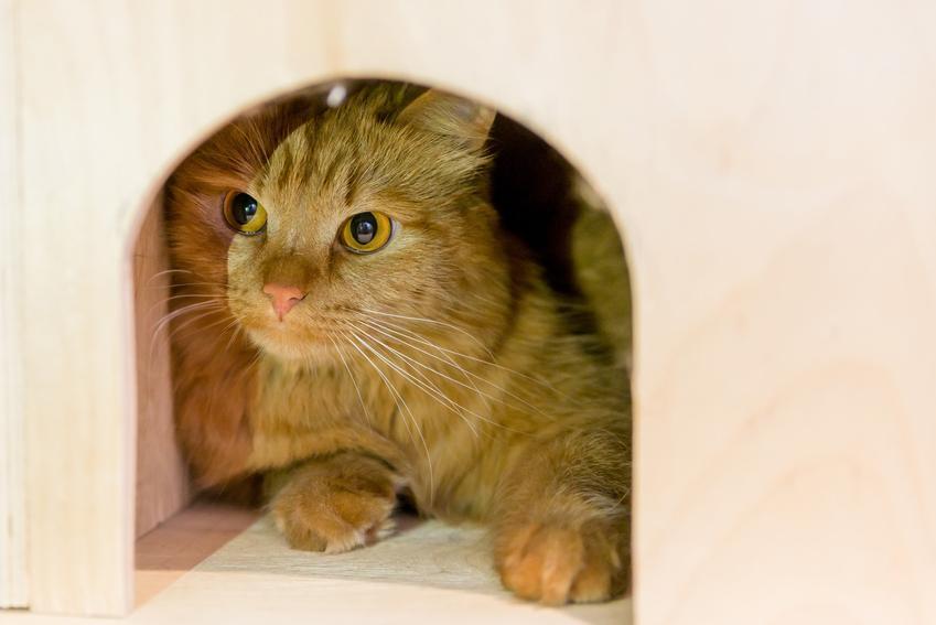 Kot w budzie, a także buda dla kota, w tym ocieplane domki i drewniany domek