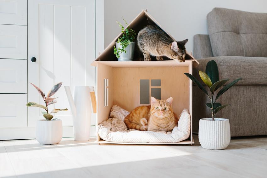 Kot w kartonowym domku, a także buda dla kota, domek drewiany i inne