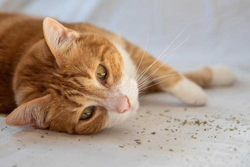 Kot leżący na podłodze, a także odstraszacz kotów i domowy straszak na koty