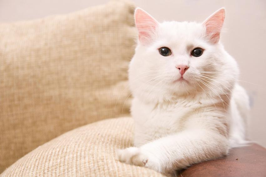 Rasy kotów - poznaj ich rodzaje