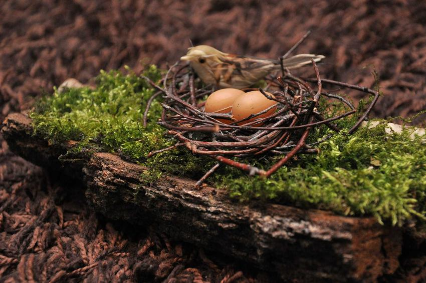 Jajka w koszyczku na mchu, a także jak zrobić stroiki wielkanocne na stół, najlepsze pomysły i porady