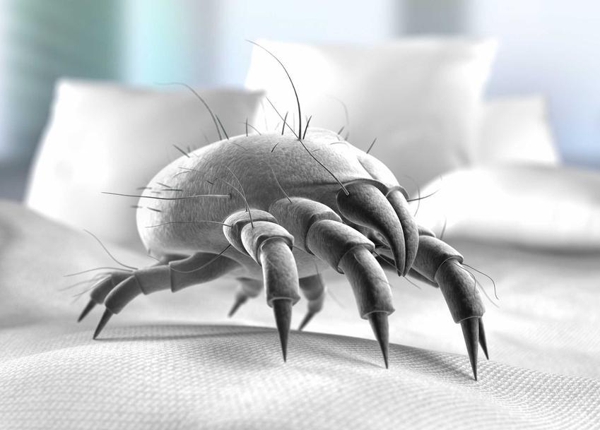 Roztocza giną w wysokiej temperaturze. Roztocza kurzu domowego to jeden z najbardziej problematycznych alergeów w naszych domach.