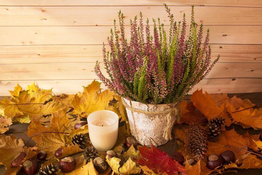 Stroik jesienny z wrzosów i kolorowych liści, a także najpiękniejsze stroiki jesienne oraz kompozycje kolorów i kwiatów na jesień