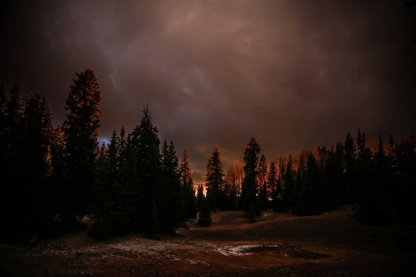 Szalejąca burza w lesie, a także informacje, co zrobić, gdy nas złapie burza w lesie lub w polu