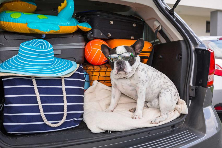 Pakowanie samochodu na wakacje, a także inne informacje, jak spakować i przygotować samochód na wakacyjny wyjazd