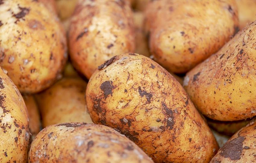 Ziemniaki są doskonałym surowcem do wytwarzania wódki