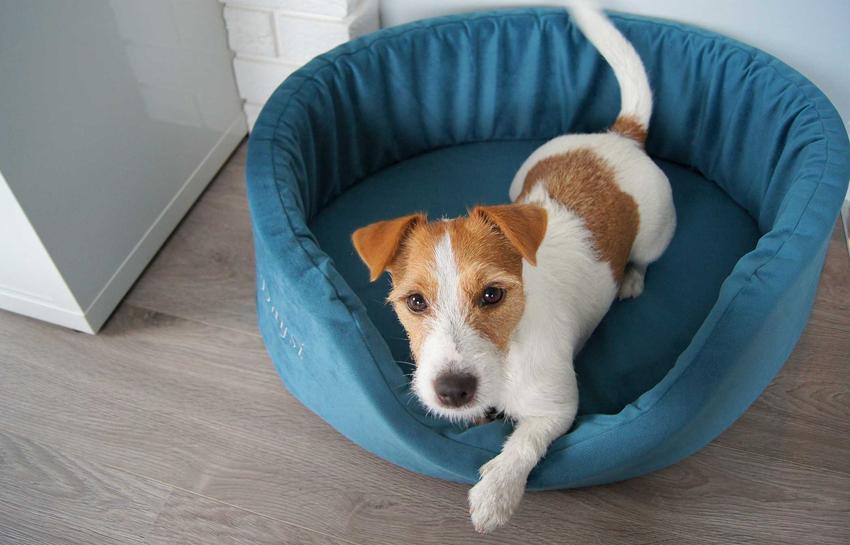 Pies na legowisku, a także informacje, jak uprać psie lub kocie legowisko krok po kroku
