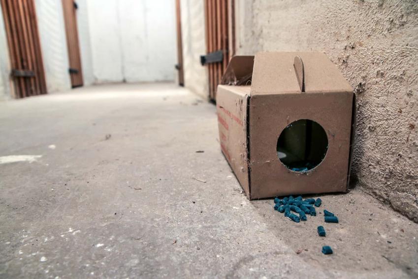 Trutka na myszy i szczury w pomieszczeniu, czy trutka na szczury działa na myszy, dlaczego myszy wchodzą do domu